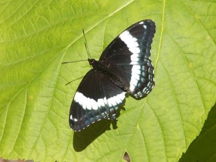 butterfly sunning itself