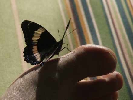 butterfly on Q's toe