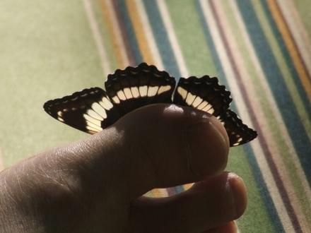 butterfly sunning itself on Q's toe
