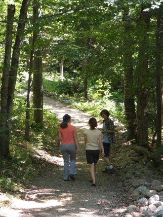 a tree-framed path