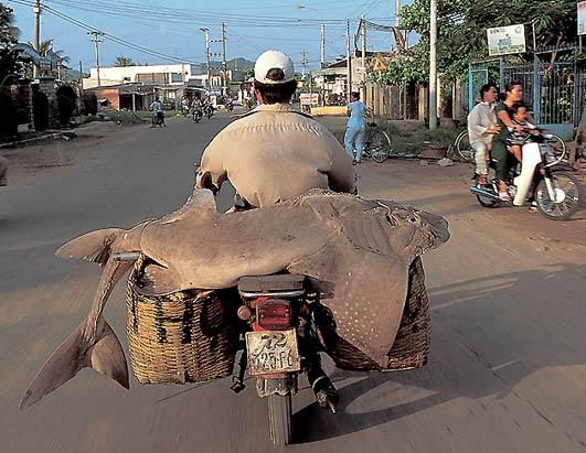 moto-vietnam-06.jpg