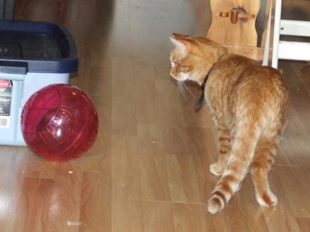 hamster ball 1