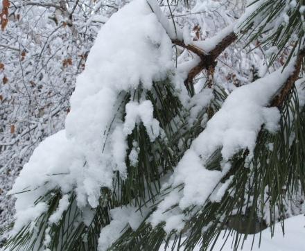 snowscape 3