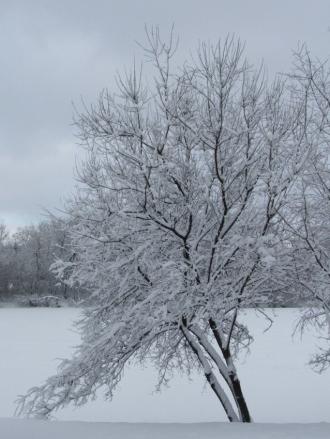 snowscape 4