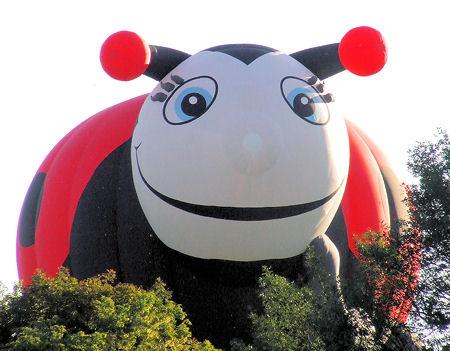 ladybug balloon_1