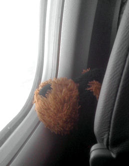 stuffed toy looking out plane window